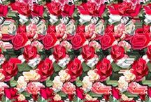 3D images /  Can you see the 3D image hidden in these pictures?