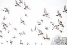 freely like birds / 鳥のように自由に♪♪♪