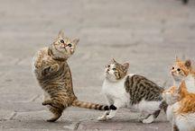 We are cats / マイペースなねこ、でも意外と淋しがりやかも・・・
