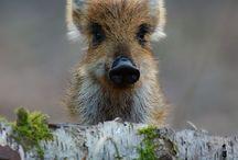 animals in nature / 野生、または自然の中にいる動物たち