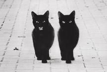 Kitty Cats.