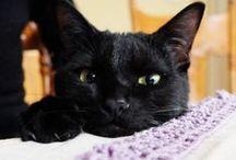 sora & riku & hana / 黒猫 そら ♂2015.7生まれ/ りく ♂2015.5生まれ / はな ♀2017.6生まれ ケンカもするけど、仲良し兄妹です