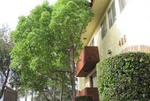 425 N. Hobart Blvd. / * 1 block from our 400 N. Serrano building * Excellent Mid-Wilshire / Korea Town Location!  For Students - A Short, Easy Commute to LA City College. Fairfax High School district!  Take a quick drive to Larchmont Village to enjoy the bevy of world class shops & restaurants.  Only minutes to Hollywood & The Wiltern Theatre.  Freeway & Blue Line close! (NOTE:  Pictures may not be of actual vacancies) / by Lange Properties