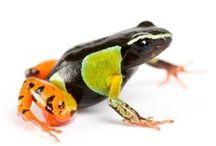 Frogs / by Carlos Sathler