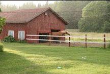 Karvaooppelit / Horses
