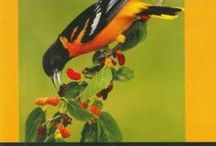 Bird lovers' resources / by Seekonk Public Library