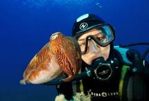 Sumérgete con Aqua Lung / by Aqua Lung