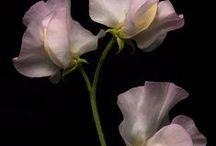 Summer Wedding Flowers Dec-Feb / Seasonal flowers availability for Summer December-February
