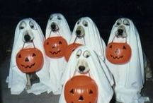 Halloween - best dog costumes / True Drool has found some of the best dog costumes for Halloween. Enjoy! see: Truedrool.com