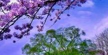 Évszakok - tavasz - spring / Évszakok - tavasz - spring