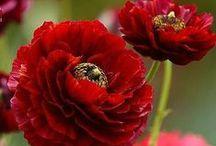 FLOWERS / Virágok -flowers