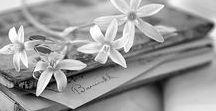 Poetry, Books and ...author's photos / «M'abbandono all'adorabile viaggio: leggere, vivere dove guidano le parole.»