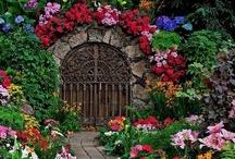 gardening/etc / by Shauna Urban