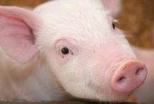 Przemysł mięsny / meat industry
