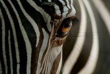 Safari ... / by Angela Leger