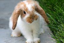 #Cute #Animals ❤