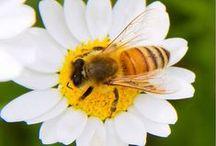 Baby Bee mine!!