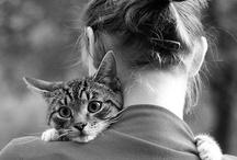 Animals / by Ashley Cassidy