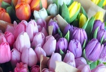 Flower Markets / Bunches of loose cut flowers and big, colorful displays at flower shops and flower markets around the world.