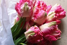 Tulips, Tulips, Tulips! / Parrot tulips, unusual tulips, and more. The most beautiful tulips that remind us of spring.