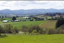 Vineyards & Wineries / Beautiful Vineyards and Wineries