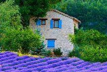 Lavendel | Lars Schönberg / Der Traum vom Süden. Lavendelfelder oder kleiner im Garten. Nur wenig Pflanzen - von Rosen abgesehen - wecken so viele Assoziationen.