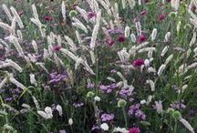 PflanzenDesign | Lars Schoenberg / Stauden und Gräser gekonnt kombiniert. Ich bevorzuge Pflanzenkombinationen, die einen natürlichen Look im Garten erzeugen. Pflanzen, die nicht nur farblich zusammen passen, sondern auch die selben Standortansprüche haben.