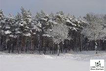 WinterWunderLand / Wald / Wood and Forest | Winterträume / Winter dreams | Schnee / Snow - Was gibt es schöneres als durch weiße Winterlandschaften zu wandern.
