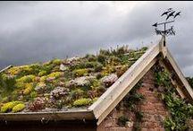 Grünes Dach  | Lars Schönberg / Ob Dachgarten oder Gründach. Tausende Flachdächer gibt es in unseren Dörfern und Städten. Was für ein riesiges Potential! Was ließen sich für tolle Gärten und artenreiche Lebensräume anlegen und gestalten.