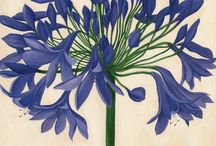Stuff I Like: Botanicals / by Rhonda May