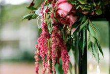 Amaranthus Inspiration