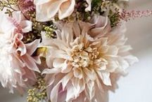 Dahlias - The Summer Flower / Summer is here and with it an explosion of riotously colorful dahlias. Some of our favorites are shown here. Enjoy!