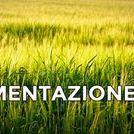SALUTE / salute , alimentazione , teorie mediche , ambiente . .