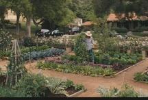 garden - veg, productive / by Karen Johnson Landscape Design