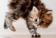 Puppies and Kittens / Animais de estimação!