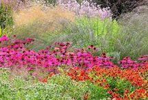 Garten * Garden