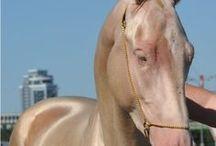 magical elf pixie horse