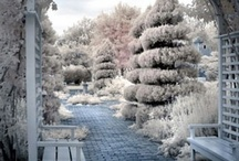 Winter gardens / by Barbara Wedderman