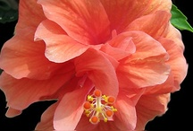 Coral color / by Barbara Wedderman