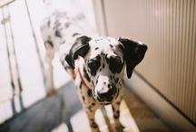 - Dogs & Puppies - / Man's best friend.