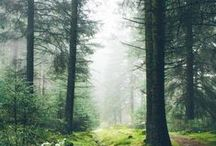 - Untouched Nature - / Wilderness at it's best.