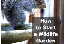 Gardening for Wildlife / by Green Bean