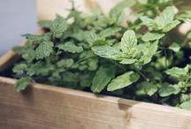 Plantbutler / outdoor