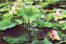 Flora / by Jenny Lee