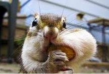 Squirrel Park / Follow the adventures of Archibald, patriarch of Squirrel Park.