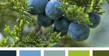 Värit Colors