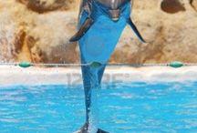 vesi eläimet