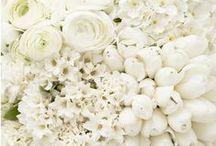 fleurs blanc-crème-ivoire