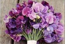 fleurs violet-parme-mauve-pourpre