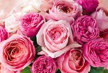 fleurs fuchsia-pink